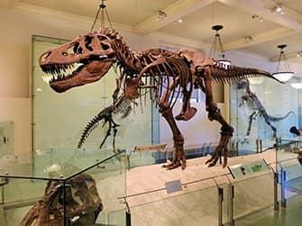 American Museum of Natural History New Yorkissa - Dinosaurus