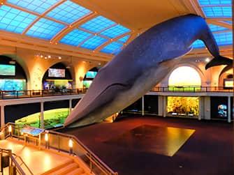 American Museum of Natural History New Yorkissa - Meren elama
