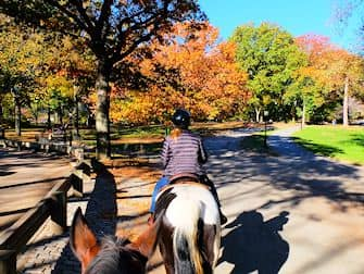 Ratsastus Central Parkissa - ratsastuspolku